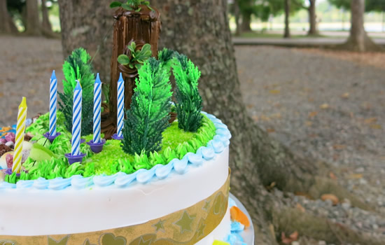 Birthday Parties at Forest Adventure